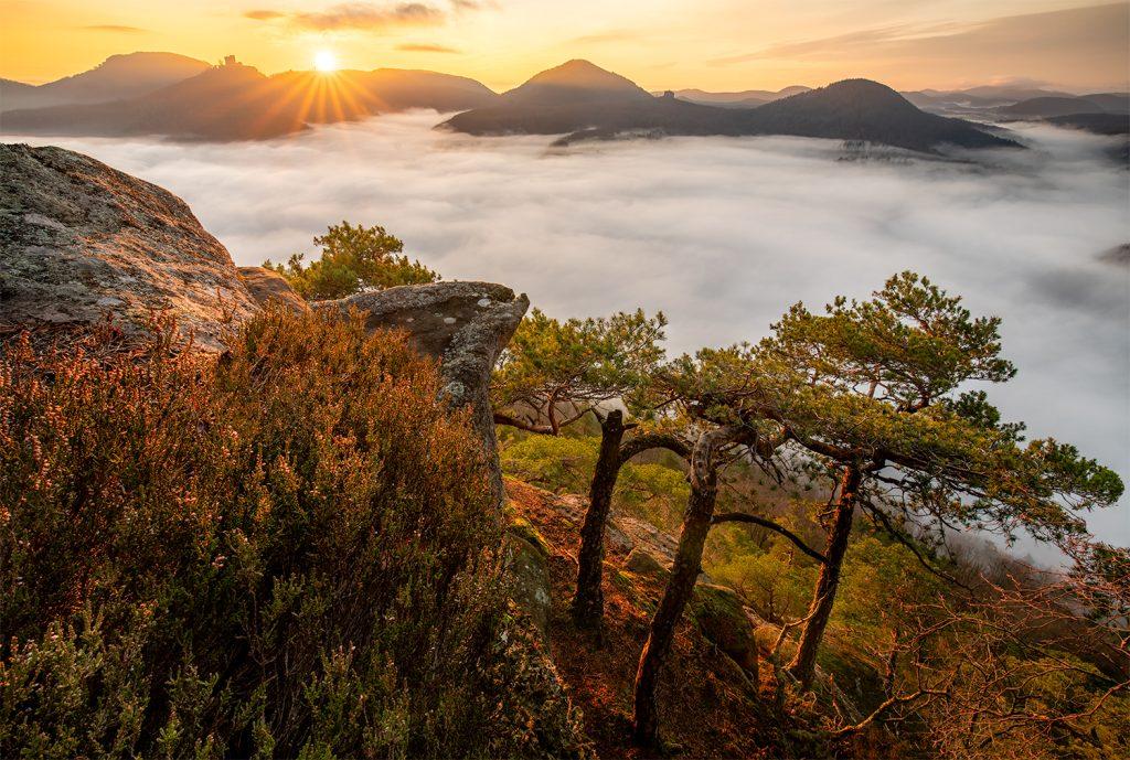 Burg Annweiler am Trifels bei vorhergesagtem Nebel als Fotomotiv.
