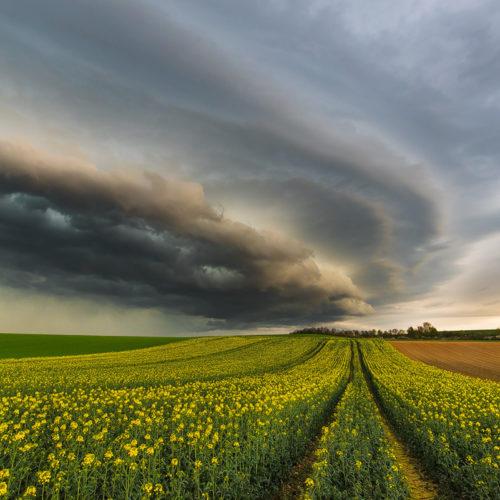 Eines meiner Traumfotos einer Gewitterfront über frischem Rapps.