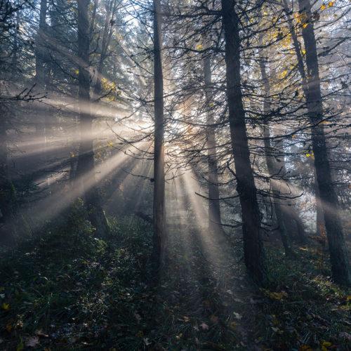 Nebel im Thüringer Wald machte es mir möglich diese Nebelstrahlen zu fotografieren.