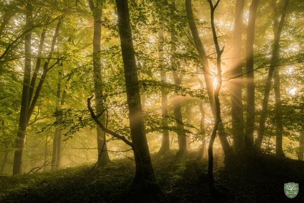 Nebelstrahlen Fotokurs Pfälzerwald