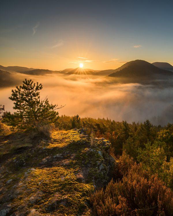 Sonnenaufgang Nebel Fotokurs Pfälzerwald