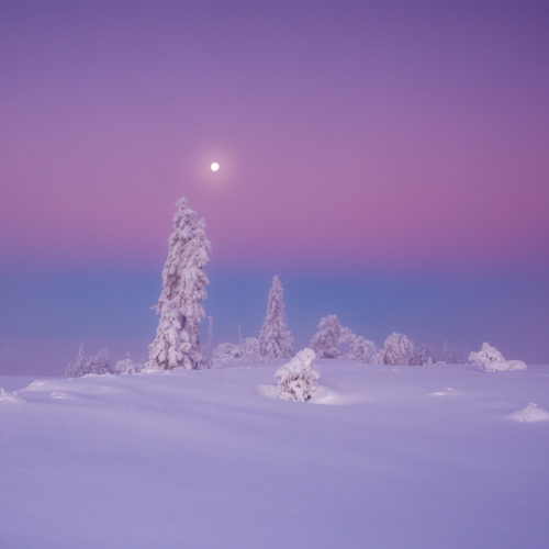 Der Vollmond scheint über der verschneiten Landschaft des Hochschwarzwaldes.