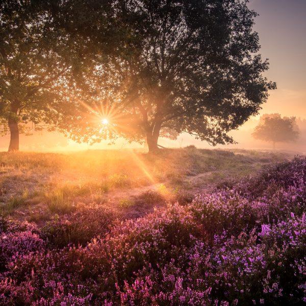 Heidelandschaft fotografieren