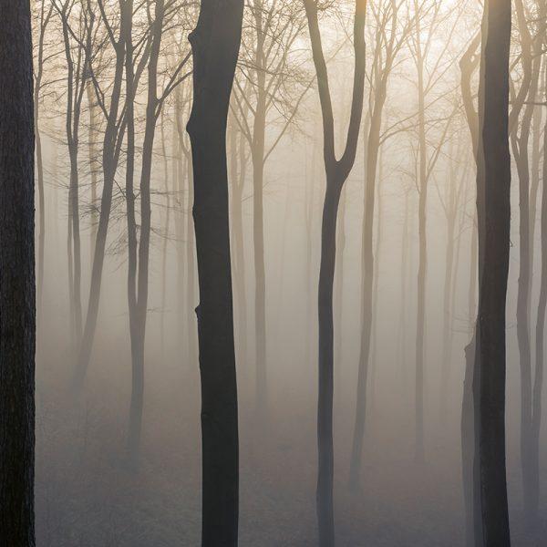 Dein Fotokurs im Odenwald